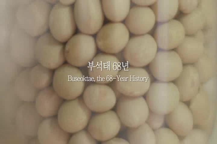 콩의 역사